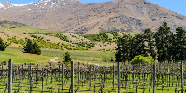 Ace Rental Cars Things to do in Queenstown otago